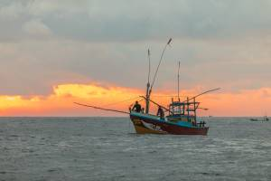 Fishermen expect a big haul during autumn