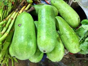 Winter melon grows on vines in bunches similar to zucchini